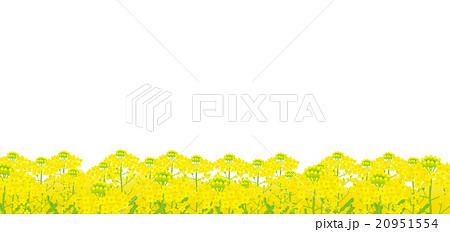 菜の花 菜の花畑のイラスト素材 20951554 Pixta