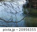 平和台公園の越ヶ迫池 20956355