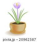 花 お花 フラワーのイラスト 20962387