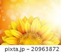 Macro SunFlower Background. EPS 10 20963872