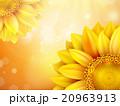 ひまわり 向日葵 花びらのイラスト 20963913