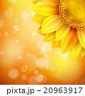 黄色い 黄 黄色のイラスト 20963917