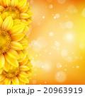 黄色い 黄 黄色のイラスト 20963919
