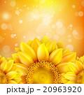 Macro SunFlower Background. EPS 10 20963920