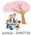 お花見 桜 花のイラスト 20967726