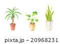 観葉植物 20968231