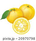 ゆず 果実 柑橘のイラスト 20970798