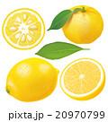 断面 柑橘 ゆずのイラスト 20970799
