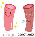 血管年齢 医療 健康 20971962