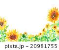 イラスト ひまわり 夏 背景 20981755