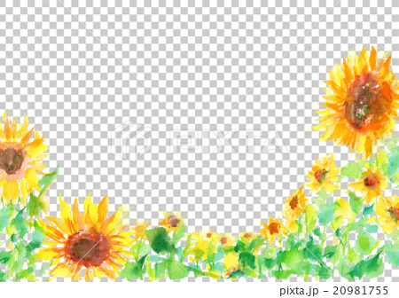 イラスト ひまわり 夏 背景