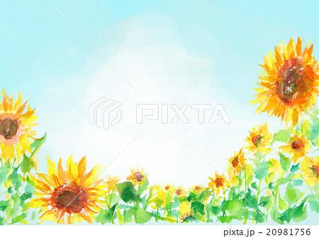 イラスト ひまわり 夏 背景 20981756