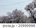 桜 20990998