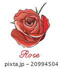 バラ 赤 赤いのイラスト 20994504