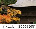 紅葉 モミジ 尊永寺の写真 20996965