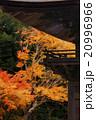 紅葉 モミジ 尊永寺の写真 20996966