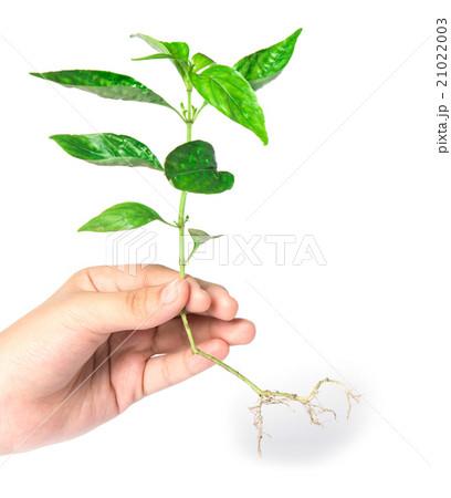 Tree in hands 21022003