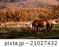 馬肥ゆる秋 21027432