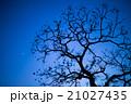 月と木 21027435