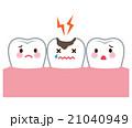 虫歯 歯 医療 21040949