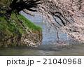 桜 春 花の写真 21040968