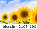 ひまわりと夏空 21054198
