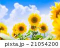 ひまわりと夏空 21054200