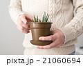 観葉植物 21060694