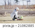 秋野菜 収穫 21062885