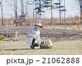 秋野菜 女性 人物の写真 21062888