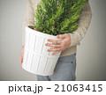 観葉植物 21063415