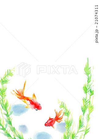イラスト 暑中見舞い 金魚 21074311