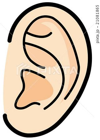 耳 21081865