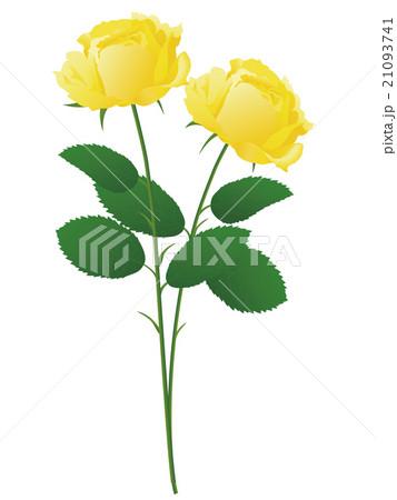 薔薇 21093741