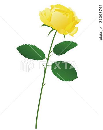 薔薇 21093742