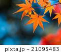 鮮やかな紅葉 21095483