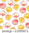 アイスランドポピー ポピー 花のイラスト 21095671