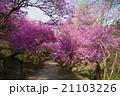 秩父岩根神社のつつじのトンネル 21103226