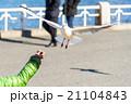 飛行 鳥 空の写真 21104843