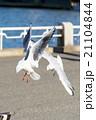 飛行 鳥 空の写真 21104844