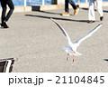 飛行 鳥 空の写真 21104845