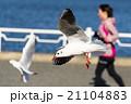 飛行 鳥 空の写真 21104883