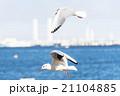 飛行 鳥 空の写真 21104885