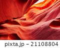 かもしか アンテロープ レイヨウの写真 21108804