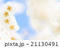 白梅 21130491