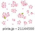 満開の桜 21144500