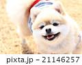 楽しいお散歩♪ 21146257