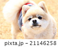 冬のお散歩♪ 21146258