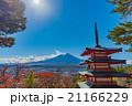 紅葉 五重塔 富士山の写真 21166229