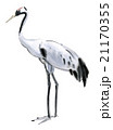 Watercolor illustration of a bird crane 21170355